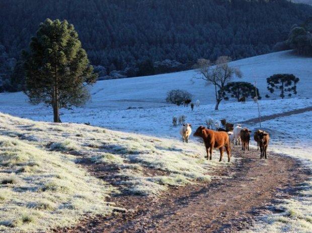 Baixas temperaturas batem recordes por três dias seguidos em Santa Catarina